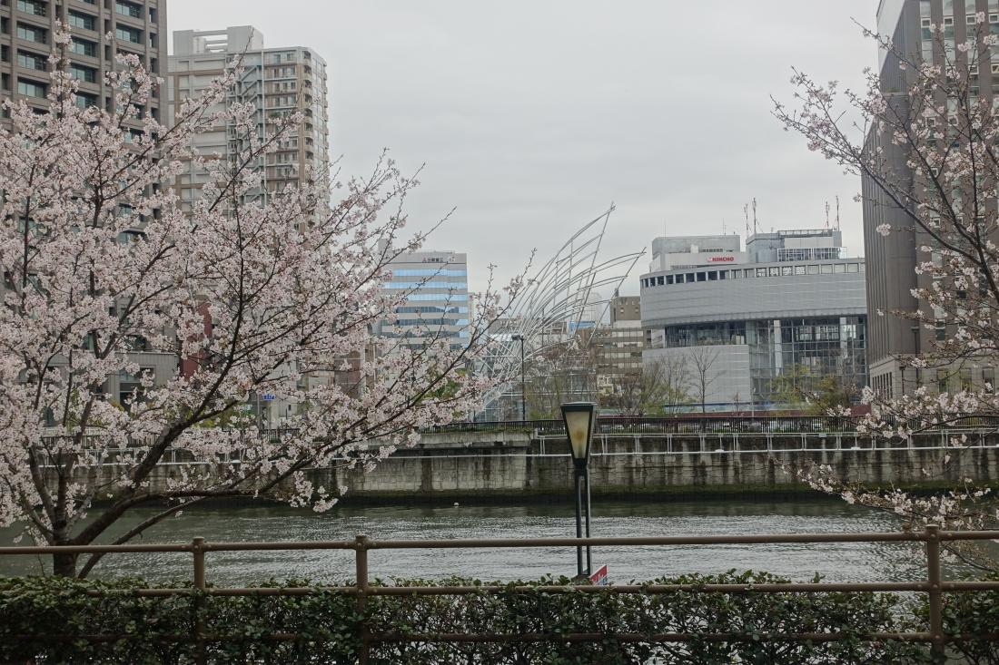 4月4日の写真のはじまり。堂島川北岸から国立国際美術館を望む。どれかわかりますか?