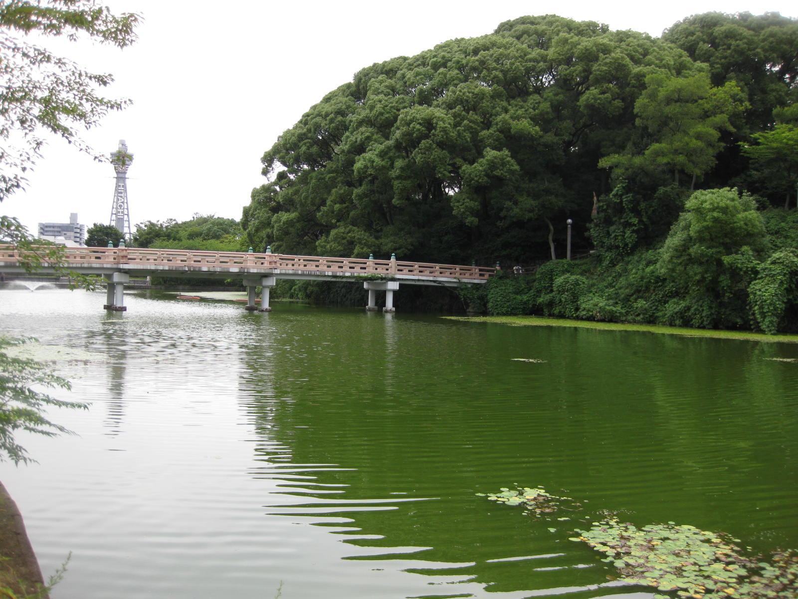 歩いて4分。河底池・和気橋(天王寺公園内)から数分