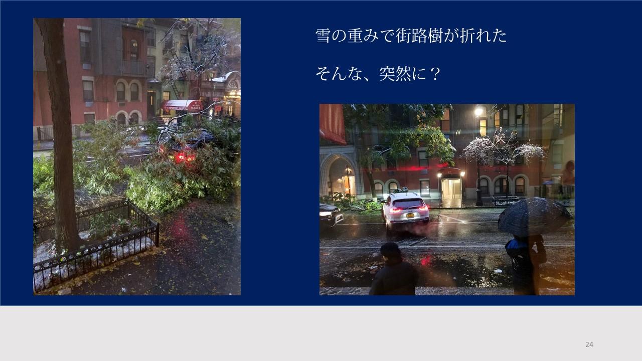 そう、突然の冬到来。街路樹が折れる瞬間のスクープを撮ったぞ(ヒロ)